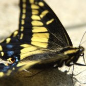butterfly_on_stone