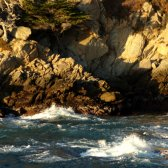 big_sur_tree_on_a_cliff_breaking_waves