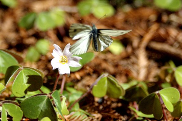 butterfly_flying_off_the_flower